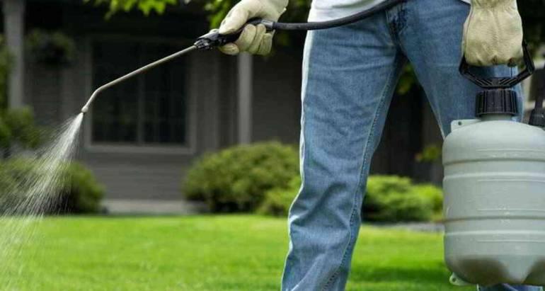 Control de plagas en tu hogar
