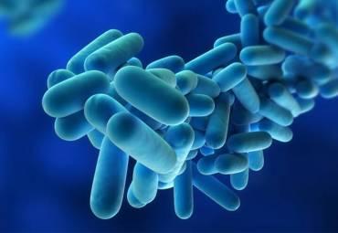 Legionella y verano
